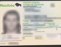 Manitoba Scannable Drivers License