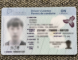 Ontario Driver Licese